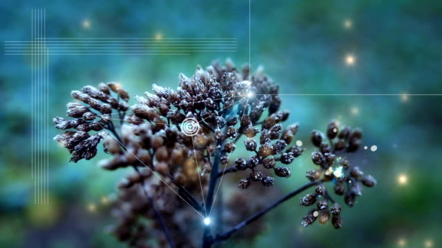 digital abstract nature complexity -  innovation concept autumn scene - saggezza video stock e b–roll