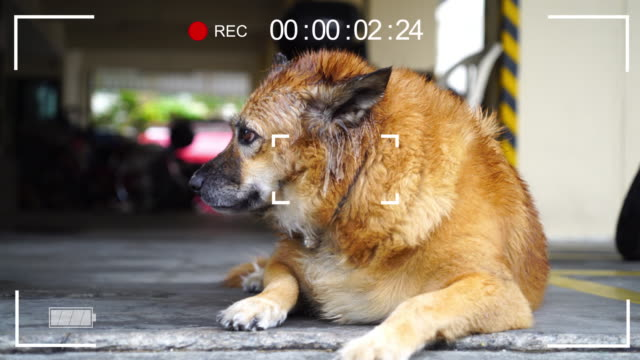Digital display interface. Camera Viewfinder in Closeup of dog