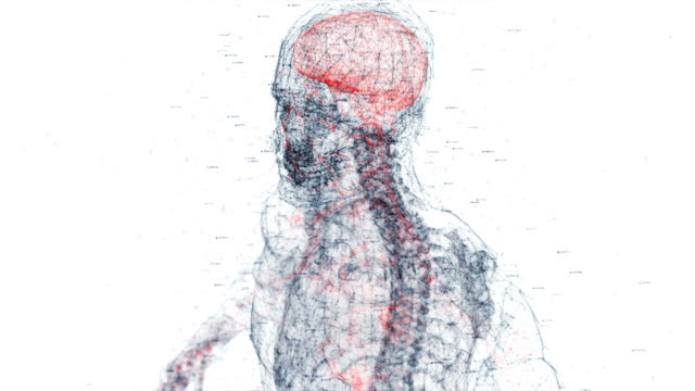 digital human body - biomedical animation stock videos & royalty-free footage