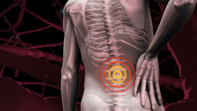 Digital human with highlighted lower back pain