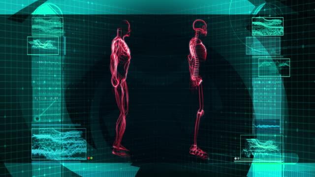 digital x-ray scan of human body (hd) - biomedical illustration stock videos & royalty-free footage