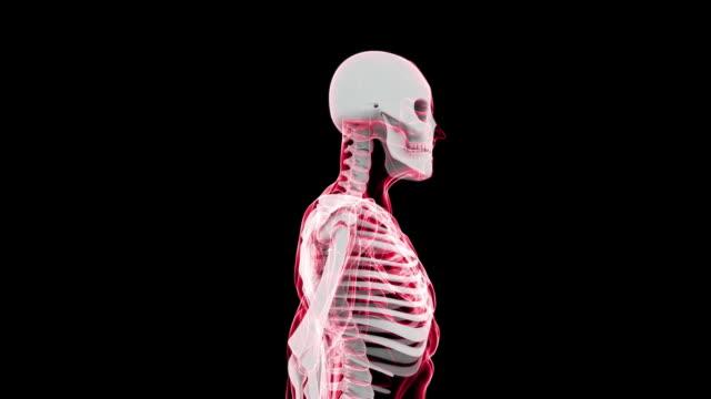 vidéos et rushes de digital x-ray scanner humaine (hd - cou humain