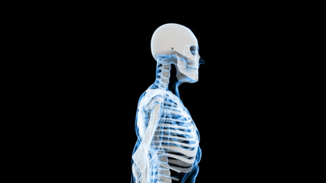 Digital X-Ray Scan of Human (HD)