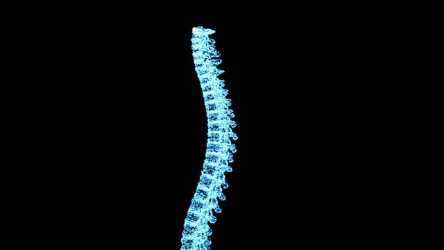 digitally enhanced video footage of an xray-scanned human spine - human spine stock videos & royalty-free footage