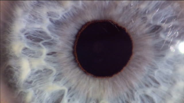 dilation and contraction of the pupil of the eye in response to changing light levels. the aperture of the pupil is controlled by the muscles of the iris, the coloured region surrounding the eye - eyeball stock videos and b-roll footage