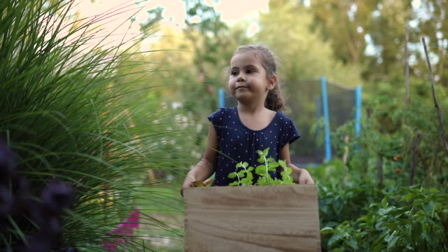 diligent 5 year's old girl in a dress carrying a wooden crate with herbs - domestic garden stock videos & royalty-free footage