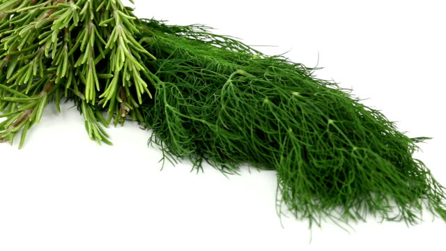dill and rosmary - dill stock videos and b-roll footage