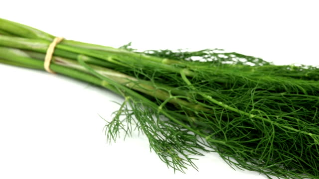 dill - dill stock videos and b-roll footage