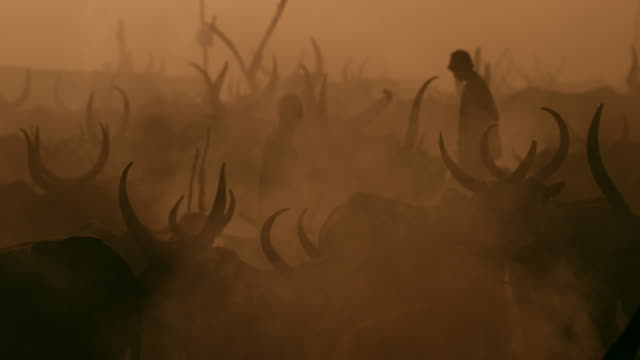 dinka tribe's cattle in smoke / sudd swamps, south sudan, africa - minoranza video stock e b–roll
