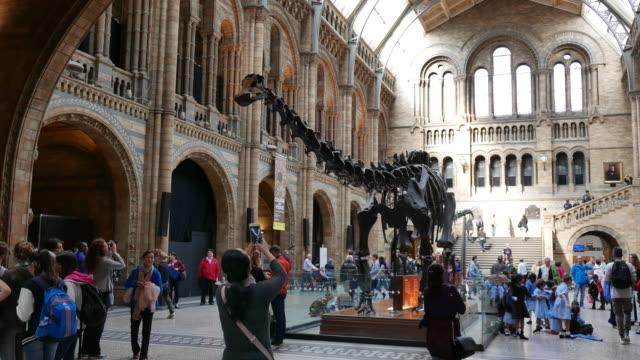 Dinosaur at Natural History Museum in London