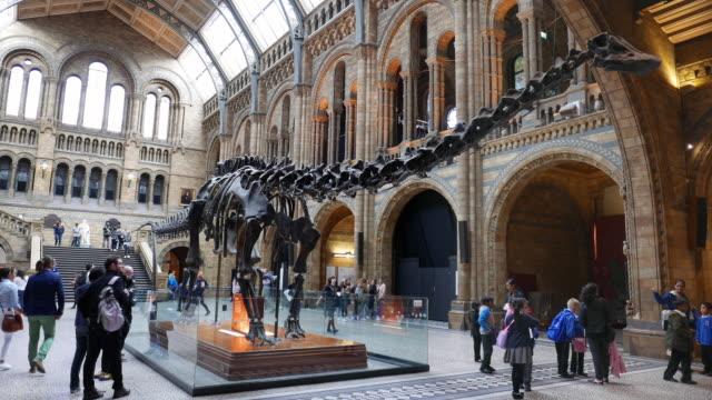 dinosaur at natural history museum in london - museum stock-videos und b-roll-filmmaterial