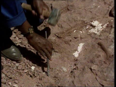 dinosaur bones found nat south africa orange free state ext gv barren landscape tilt down to excavators around bone find tcs outline of fossilized... - chisel stock videos and b-roll footage