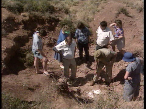 dinosaur bones found south africa orange free state gv barren landscape tilt down to excavators surrounding bone find tcs outline of fossilized bone... - chisel stock videos and b-roll footage