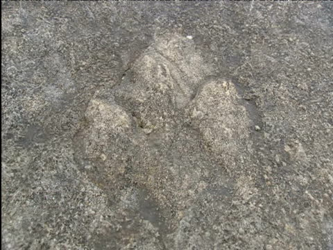 dinosaur footprints fossilised in portland stone - footprint stock videos & royalty-free footage