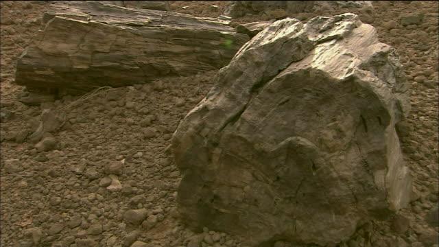 Dinosaur Fossil In Sahara Desert