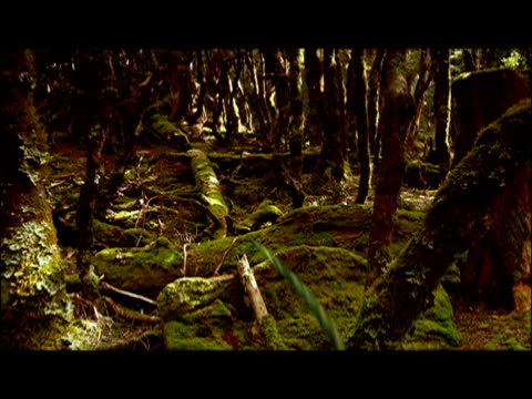cgi, dinosaur running an hopping through jungle  - eoraptor stock videos and b-roll footage