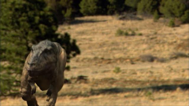 CGI, CU, Dinosaur running in field