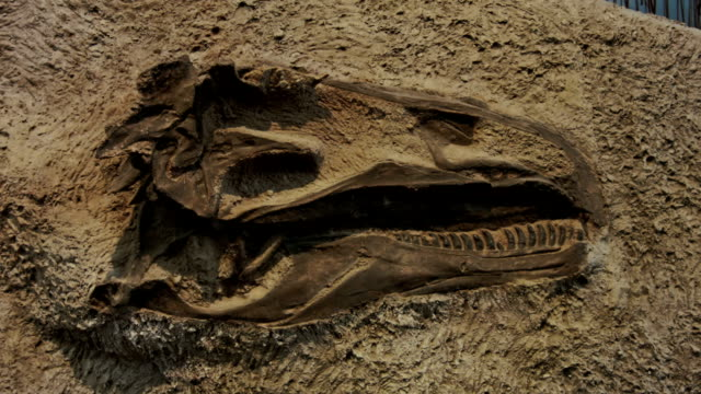 dinosaur skull - bone stock videos & royalty-free footage