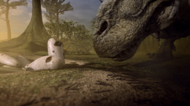 a dinosaur watches her babies hatch. - animal nest stock videos & royalty-free footage
