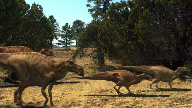 dinosaurs of various species walk along a plain. - dinosaur stock videos & royalty-free footage
