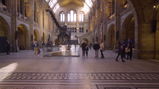 dippy diplodocus skeleton replica in hintze hall of the natural history museum in london during its last days on display before going on tour around... - tierisches skelett stock-videos und b-roll-filmmaterial