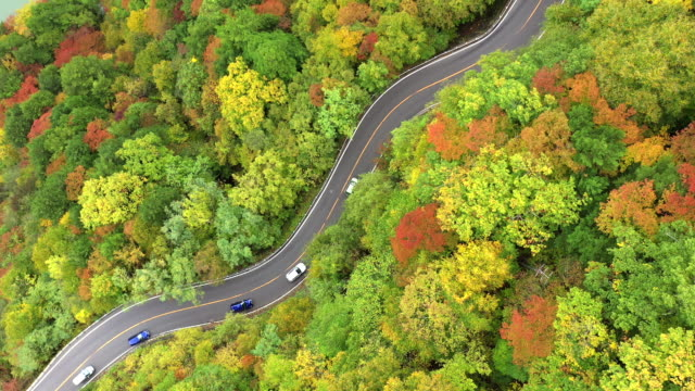 direct above aerial view of country road in sunny autumn forest - country road stock videos & royalty-free footage
