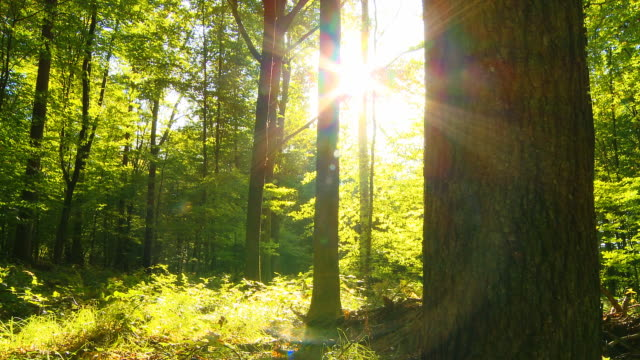 hd dolly: direct sunlight in green forest - woodland stock videos & royalty-free footage