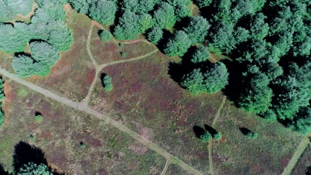 directly above aerial footage on the family walking on the path in the field in pocono, pennsylvania, at fall. - pinaceae stock videos & royalty-free footage