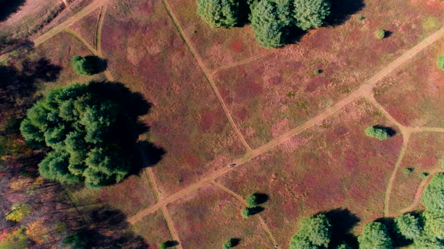 Directly above aerial footage on the family walking on the path in the field in Pocono, Pennsylvania, at fall.