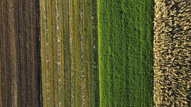 vídeos de stock, filmes e b-roll de diretamente acima dos campos agrícolas - variação
