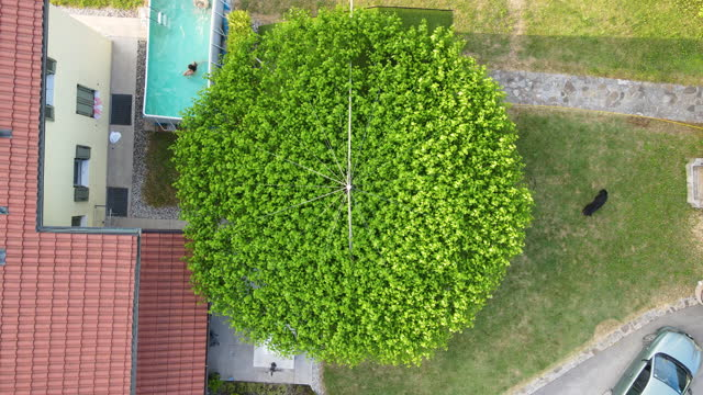 directly above treetop cultivated to grow in circle in backyard - treetop stock videos & royalty-free footage