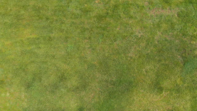directly above view of a man using lawn mower in a garden - machinery stock videos & royalty-free footage
