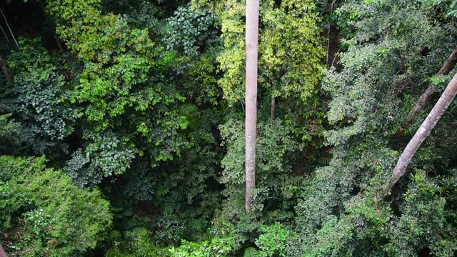 directly above view of jungle in sabah borneo - tree trunk stock videos & royalty-free footage