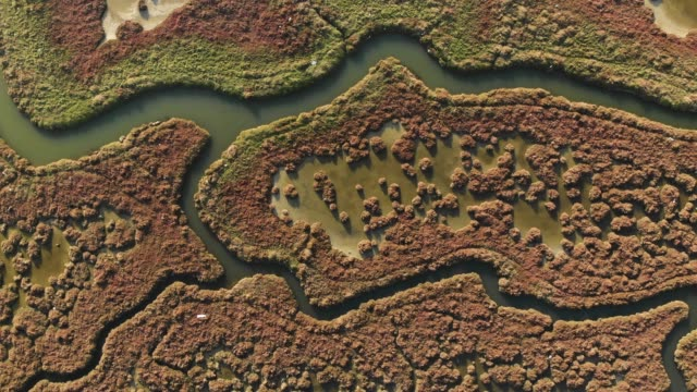 directly above view of wetland - natural pattern stock videos & royalty-free footage