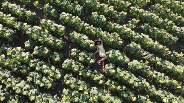 directly above view of young woman having fun in a sunflower field - boho stock videos & royalty-free footage