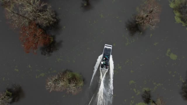 directly overhead aerial drone shot of an airboat speeding between cypress trees in the atchafalaya river basin swamp in southern louisiana under an overcast sky - louisiana stock videos & royalty-free footage