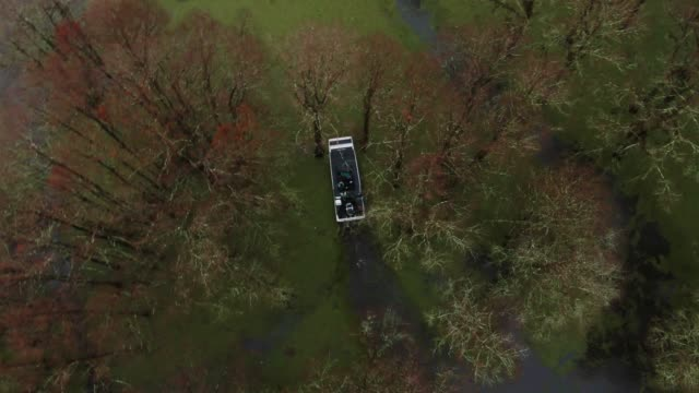 directly overhead aerial drone shot of an airboat tour navigating through a forest of cypress trees covered in spanish moss and floating salvinia (fern) in the atchafalaya river basin swamp in southern louisiana under an overcast sky - louisiana stock videos & royalty-free footage