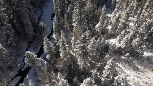 サンファン山脈 (ロッキー山脈) コロラド州ユーレイ上で明るい冬の日に雪林常緑高木と渓流の空中ドローン ショットをトラックをオーバーヘッド/ティルティング直接 - ユアレイ市点の映像素材/bロール