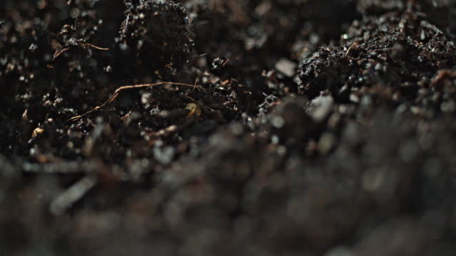 dirt explosion slow motion macro explosion - dirt stock videos & royalty-free footage