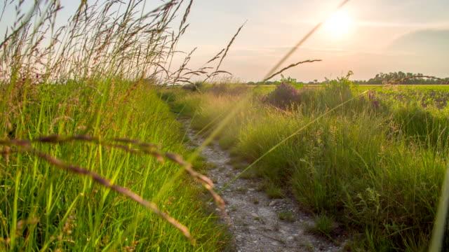 stockvideo's en b-roll-footage met ws ds dirt road between meadows - weide