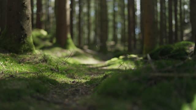 grusvägsstig inuti en tallskog - ourbaniserat motiv bildbanksvideor och videomaterial från bakom kulisserna