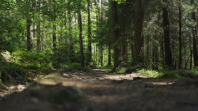 dirt road footpath inside a pine tree forest - footpath stock videos & royalty-free footage