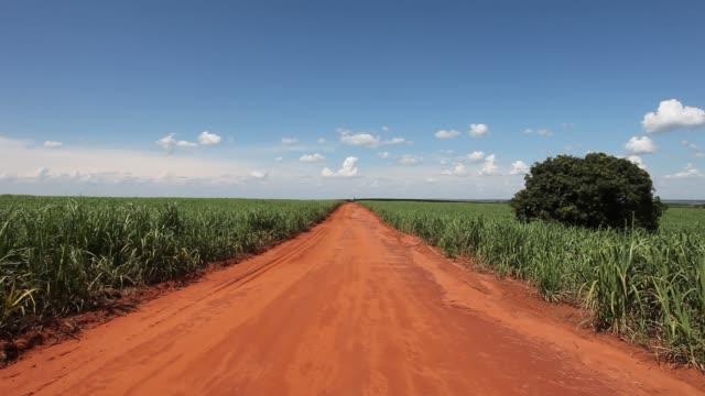 Dirt road in a sugarcane plantation