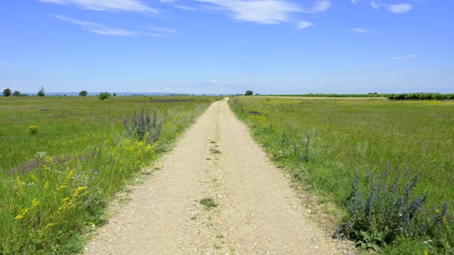vidéos et rushes de dirt road in meadow, apetlon, nationalpark lake neusiedl, burgenland, austria - route à une voie