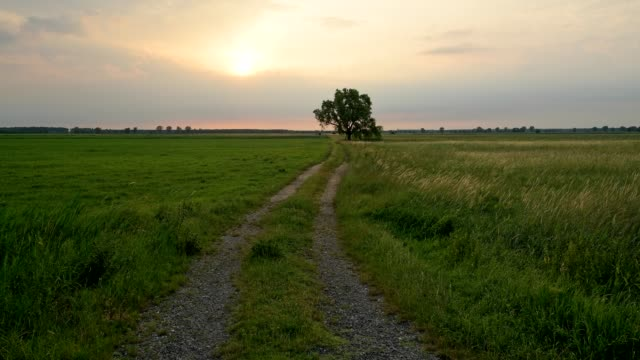 dirt road in meadow at sunrise, tadten, burgenland, austria - tire track stock videos & royalty-free footage