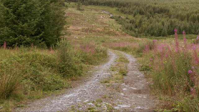 Dirt road in Scottish rural scene