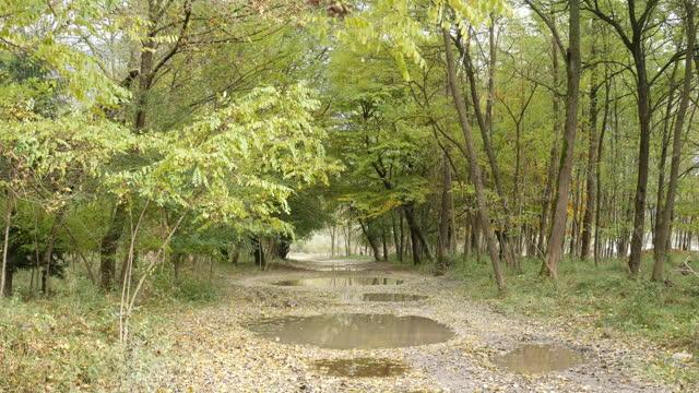 stockvideo's en b-roll-footage met onverharde weg in de achtergrond van de bosvideo - voetgangerspad