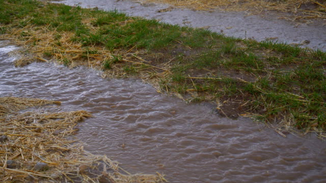 vidéos et rushes de chemin de terre sous la pluie d'été - mouillé