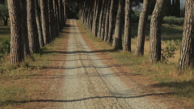 vídeos y material grabado en eventos de stock de ws tu dirt road lined with trees / tuscany, italy - toscana