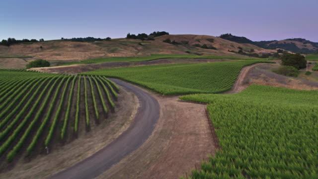 Dirt Road Winding Between Vineyards in Sonoma County, CA